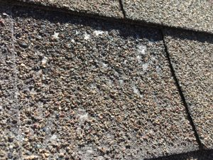 fibers exposed and missing granules on asphalt roofing shingles