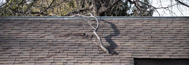 fallen tree branch on roof